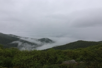Even though it was foggy Shenandoah National Park was awesome