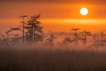 Everglades National Park at Sunrise