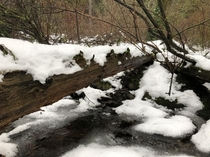 Exploring little creeks in the snow