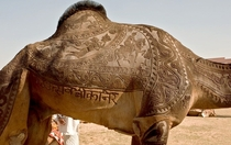 Exquisitely decorated camel