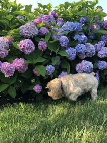 Failed photo of my dog and my flowers