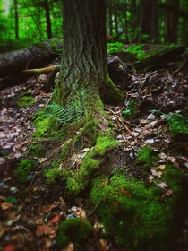 Fairy forest in the Lanark Highlands Ontario Canada  OC