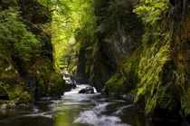 Fairy Glen a secluded mossy gorge in North Wales  Photographed by Andrew Kearton