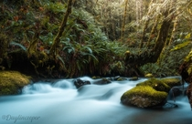 Fairy tale Creeks deep in Vancouver Islands Rain forest Canada OC insta daylincooper