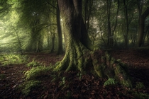 Fairytale forest mood Ermelo the Netherlands