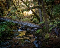 Fairytale-like creek in Southern Oregon