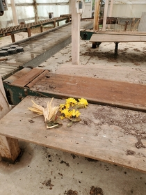 Fake flowers left behind in an abandoned greenhouse