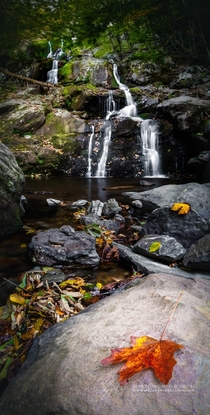 Fall arrives at Dark Hollow Falls in Shenandoah National Park Virginia