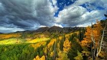 Fall at Kebler Pass CO featuring the largest aspen stand in the US