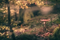 Fall bringing lovely subjects to German Odenwald