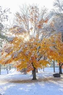 Fall Colors and Snow Madison Wisconsin