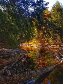Fall colors and sunlight creates the illusion of fire along the shoreline Big Rideau Lake Ontario Canada  OC