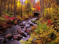 Fall colors at a stream near Milford New Hampshire