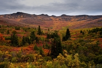 Fall colors beside the highway near Chicken Alaska