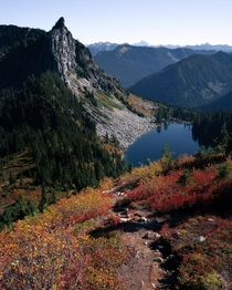 Fall colors carpeting the forest in Washington