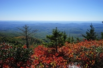 Fall colors coming out Grandfather Mountain NC