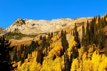 Fall colors in Mill D South Big Cottonwood Canyon Utah