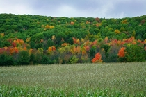 Fall colors of Upstate NY