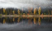 Fall colors on display during a foggy morning at Trillium Lake near Mt Hood in Oregon