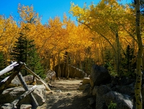 Fall colors starting on Glacier Gorge Trail CO