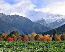 Fall colours New Zealand