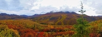 Fall Colours on the Dempster Highway Yukon x