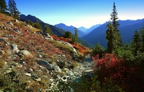 Fall - Duckabush - Olympic National Park