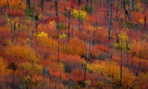 Fall foliage close to the Arctic Circle Yukon Territory Canada