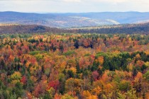 Fall Foliage Seen From Hogback Mountain - Wilmington
