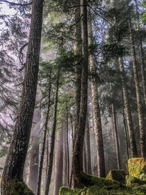 Fall hiking in the Evergreen State  IGhikedailyprn