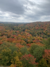 Fall in Algonquin park   x