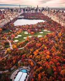 Fall in Big Apple craigsbeds