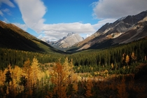 Fall in Kananaskis south of Mt Pocaterra OC