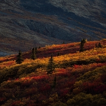 Fall in the Canadian Arctic tundra Yukon Territory