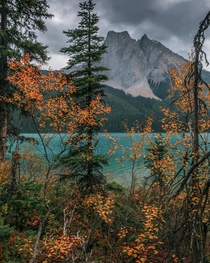 Fall in YOHO National Park  x IGdantherestless