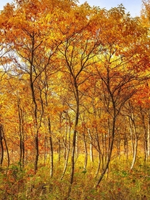 Fall is in full swing in Southern Ontario Ojibway Tallgrass Prairie Windsor ON