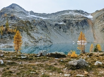 Fall Larches at Wing Lake in Washington State