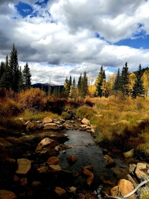 Fall turns the Aspen tree leaves bright yellow and its breathtaking Kenosha Pass Colorado OC  x