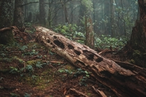 Fallen Ancient - Rattlesnake Mountain Washington USA