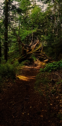 Fallen Tree Wicklow Mountains Ireland