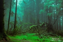 Fallen Trees Surrounded By The Mist Windermere The Lake District