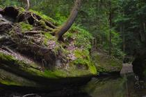 Falling Trees Hocking Hills State Park Ohio OC