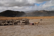 Farm life in the Ecuadorian Andes - dog amp ewes