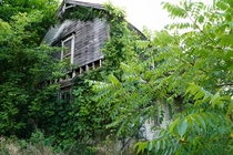 Farmhouse being consumed by nature Mount Gilead Ohio