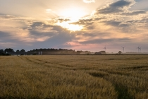 Farming crops and wind in Mecklenburg  Germany