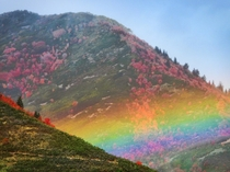 Fattest rainbow Ive ever seen above the newly changing Utah leaves