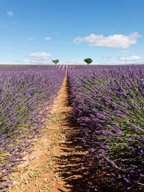 Feast for the Eyes Lavender Season in Valensole France