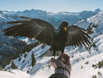 Feeding birds high up in the German Alps x