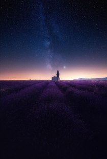 Feeling the smell of lavenders while looking at the stars