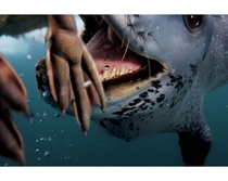 Female leopard seal Hydrurga leptonyx attempts to feed a penguin to underwater photographer Paul Nicklen